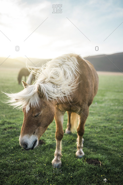 Wild horse standing on grassy field during sunny day