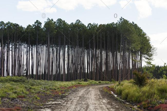 Tree clearing in Australia