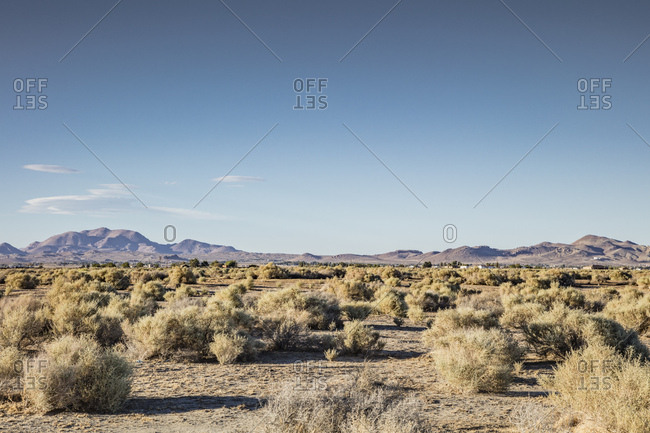 Tumbleweeds and desert scrub bushes spread out across the valley floor of the Mojave Desert of California.