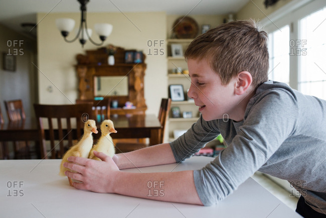 Boy with two ducklings indoors