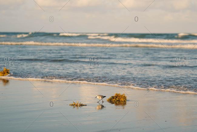 Bird walking along a beach