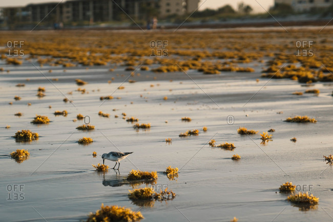 Bird grazing along a beach