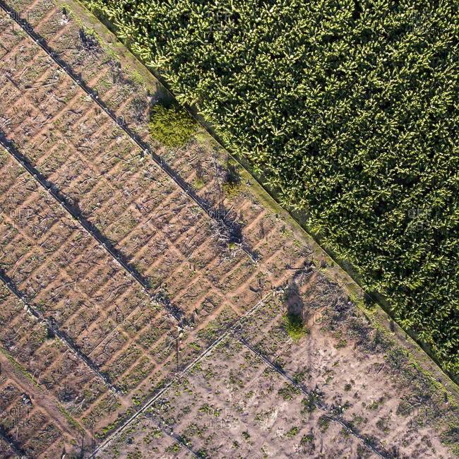 High angle view of  a banana plantation in Gran Canaria, Canary Islands, Spain