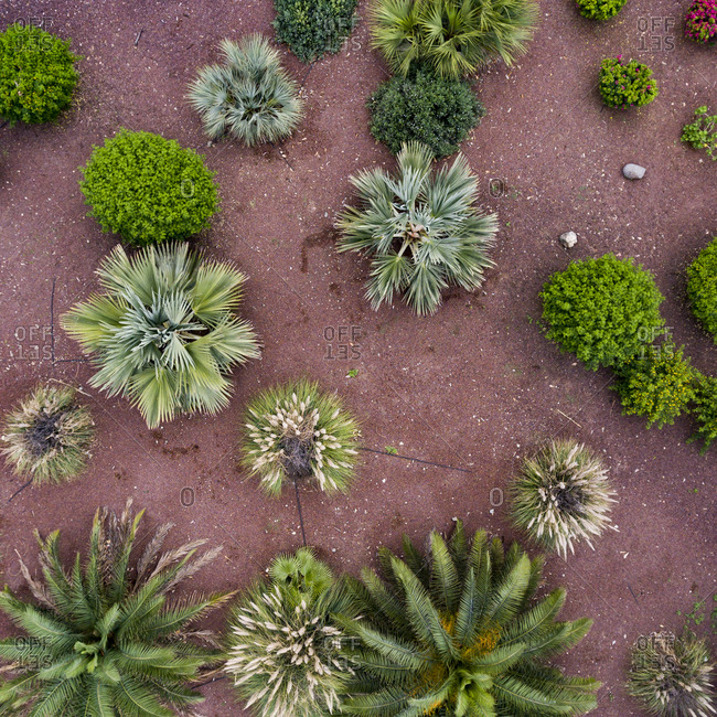 Overhead view of city park in Maspalomas, Gran Canaria, Canary Islands, Spain