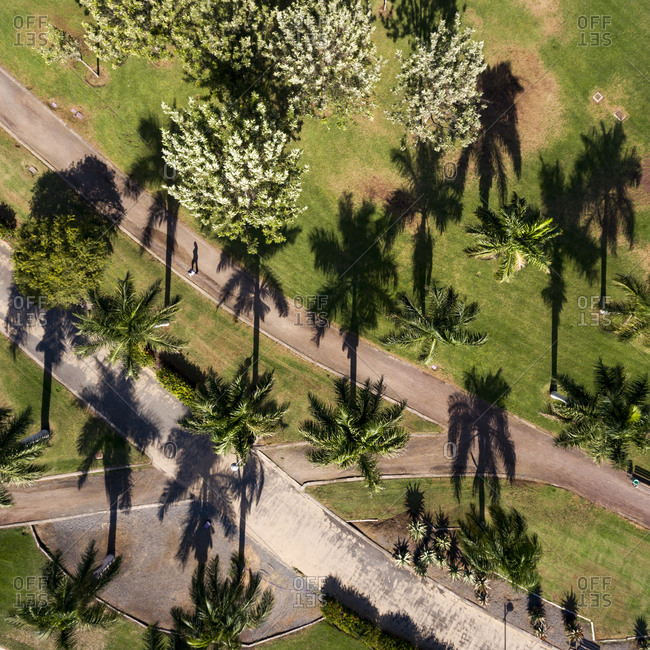 Man walking in a park with palm trees