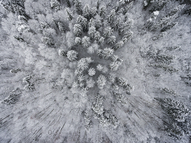 Aerial view of trees in a snow-covered forest
