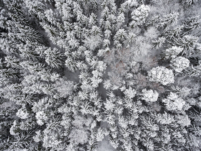 Aerial view of white treetops in a frozen forest