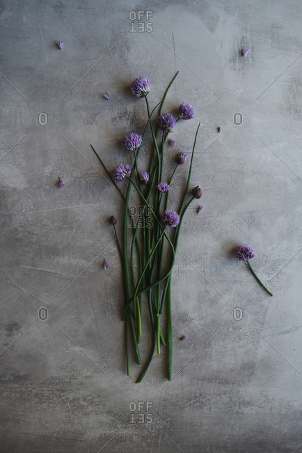 Many cut purple flowers with long stems