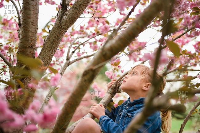 Girl climbing a tree with cherry blossoms