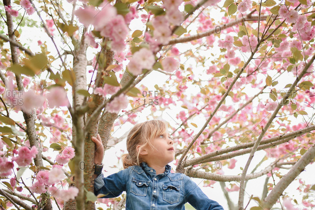 Girl sitting in a tree with cherry blossoms