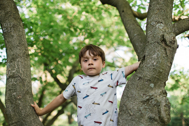 Young boy in tree crook