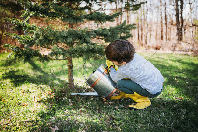 Young boy watering small trees