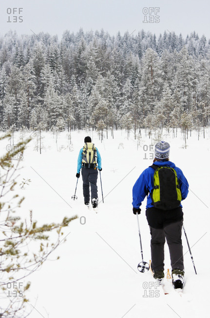 Women cross country skiing in winter forest