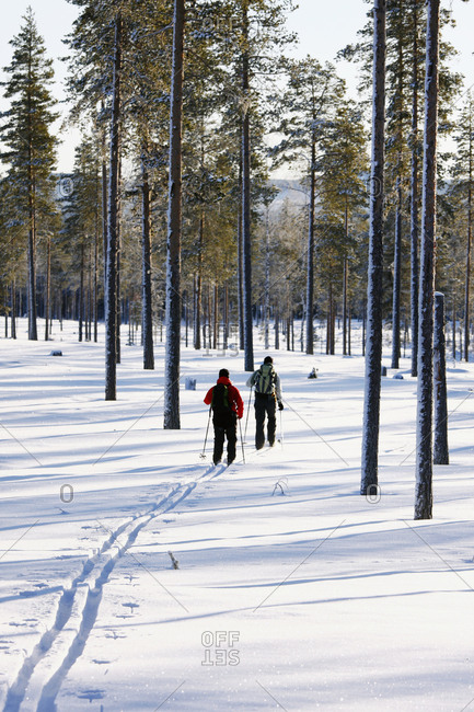 Women skiing in winter forest