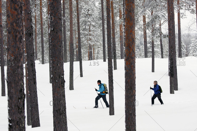 Women skiing in forest