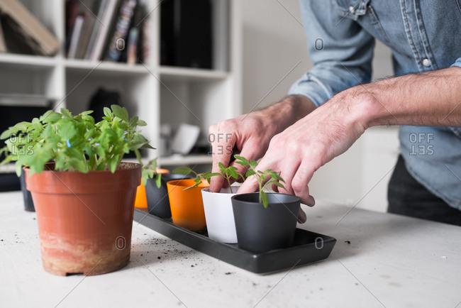 Man potting plants in kitchen