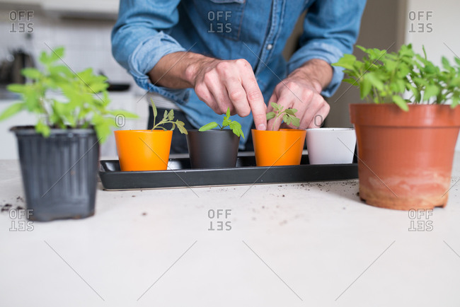 Man potting plants in a kitchen