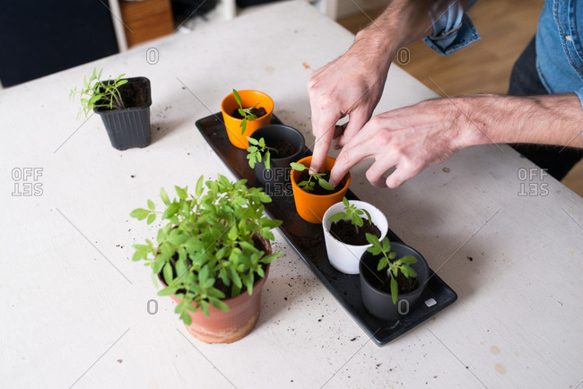 Man potting plants in home