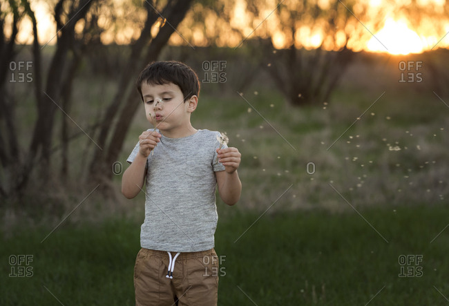 Boy standing in a field at sunset blowing dandelion flowers