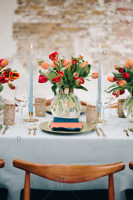 Red and coral tulips with blue candles on dining table
