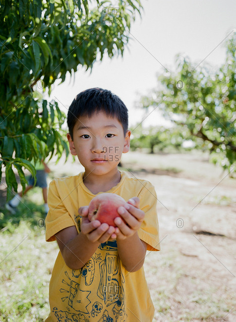 Boy holding a fresh-picked peach in orchard
