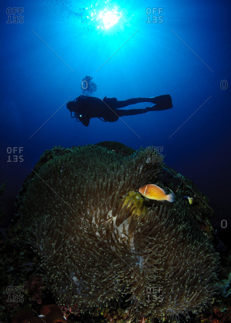 Philippines- Dumaguete- diver in the sea