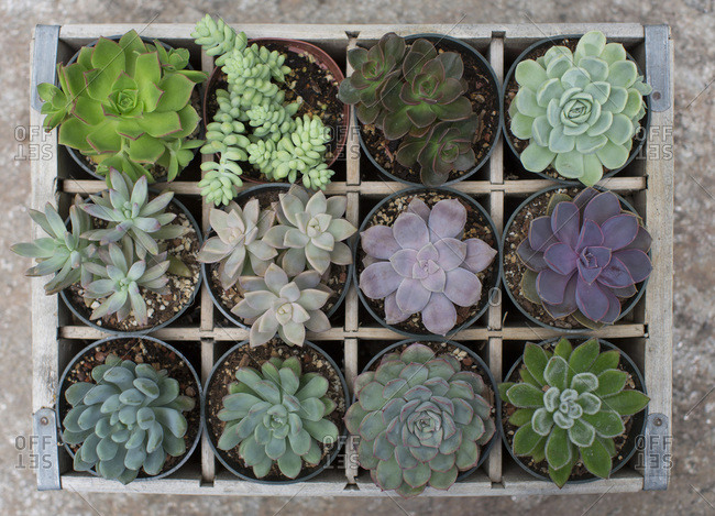 overhead view of succulent plants