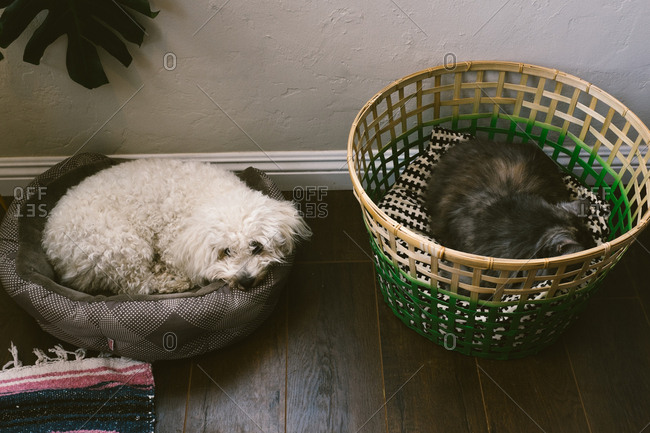 A dog and cat sleeping in beds next to each other