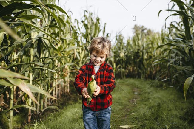 Boy standing in a corn field holding an ear of corn