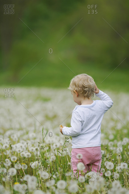 Rear view of toddler standing amidst dandelions in field