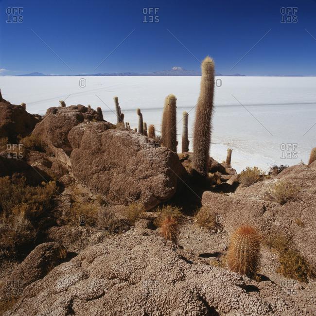 Cactus on rock formation in desert against blue sky, Salar de Uyuni, Bolivia