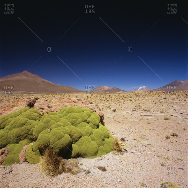 Idyllic shot of desert landscape against clear blue sky on sunny day, Altiplano, Bolivia