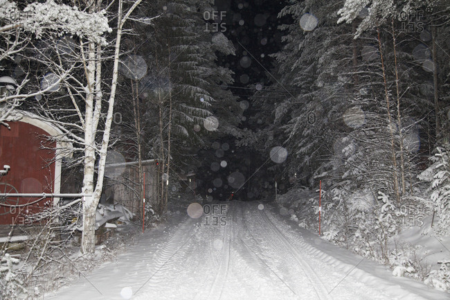 Road amidst trees in snowy weather at night