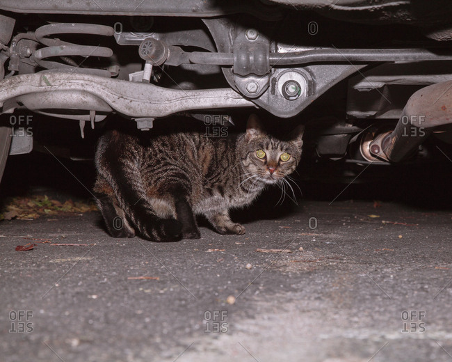 Image of cat under car