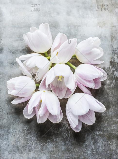 Still life of tulips flower heads