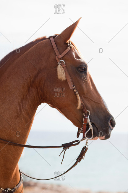 Horse looking into distance - Offset