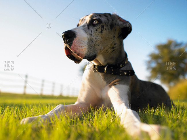 Dog on grass - Offset Collection