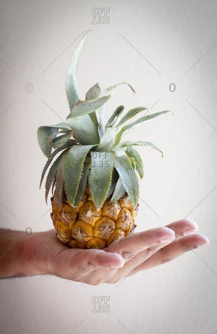 Man holding baby pineapple straight view