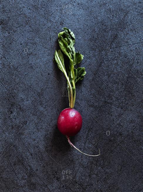 European radish