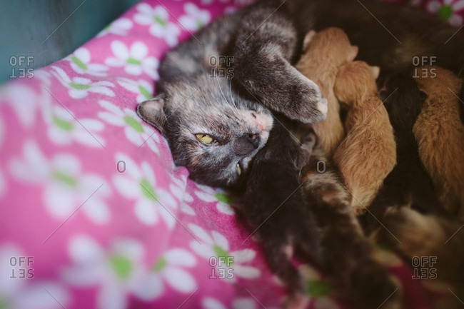 Mother cat with nursing litter