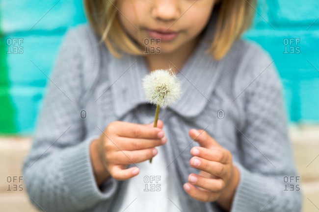 Girl holding a dandelion that has gone to seed