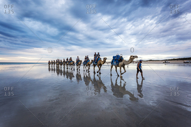 Cable Beach, Australia - September 30, 2016: Cable Beach, Western Australia. Camels on the shore at sunset