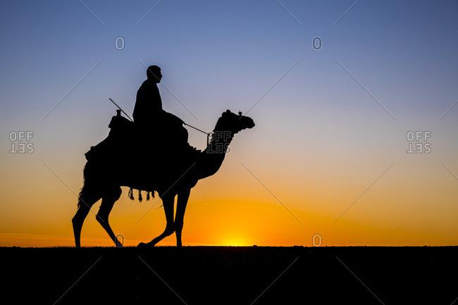 Camel in the desert near Giza, Cairo, Egypt
