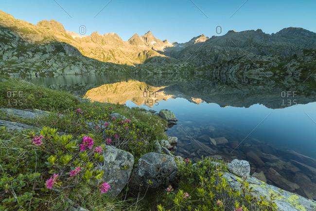Rhododendrons frame the blue water of Lago Nero at dawn, Cornisello Pinzolo, Brenta Dolomites, Trentino-Alto Adige, Italy, Europe