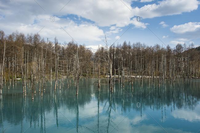 Blue Pond (Aoi Ike), Daisetsuzan National Park, UNESCO World Heritage Site, Hokkaido, Japan, Asia