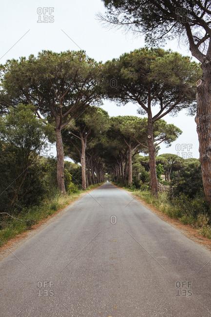 Trees on country road, Tuscany, Italy, Chianti region