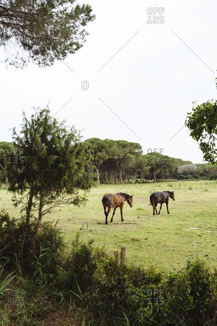 Horses on farm, Tuscany, Italy, Chianti region