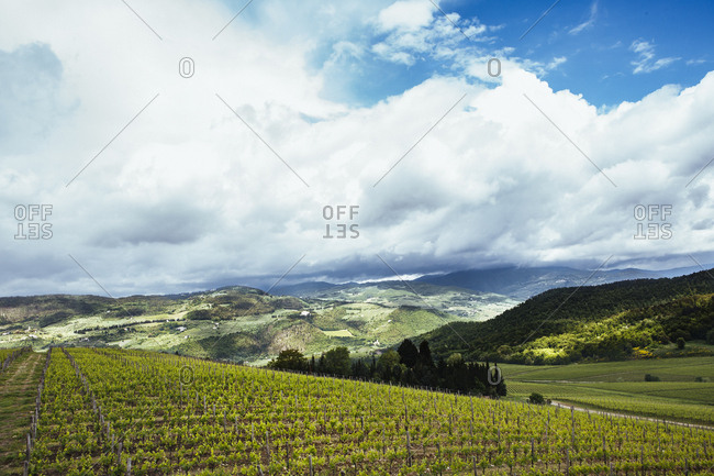 View of vineyards, Tuscany, Italy, Chianti region