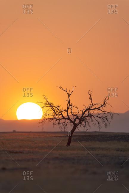 Africa, Namibia, Namib Desert, Namib-Naukluft National Park, Sossusvlei. Dead trees silhouetted in the sunset.
