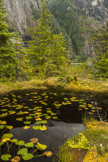 USA, Alaska, Tongass National Forest. Mountain landscape and lily pads on pond.